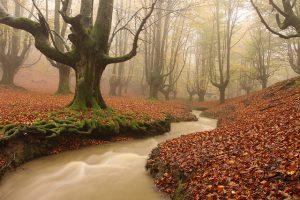 Hayedo de Otzarreta (Imagen www-flickr-comphotospablofausto6376281071)