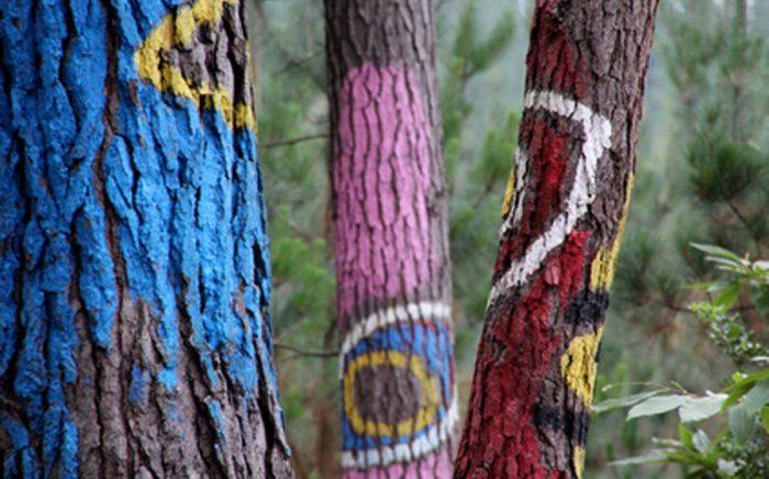 Bosque de Oma_Excursiones con niños Bizkaia